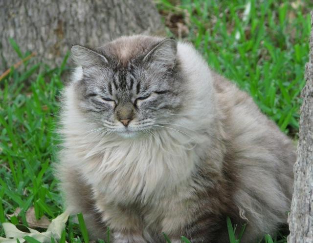 Miss Kitty (7)